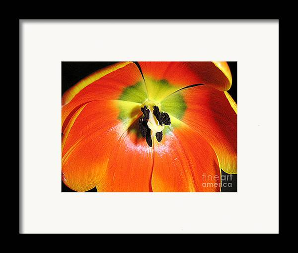 Nature Framed Print featuring the photograph Tulips - An Inside Look by Lucyna A M Green