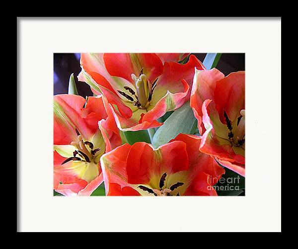 Nature Framed Print featuring the photograph Tulips - Competing For Attention by Lucyna A M Green