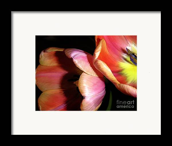 Nature Framed Print featuring the photograph Tulips - Night And Day by Lucyna A M Green