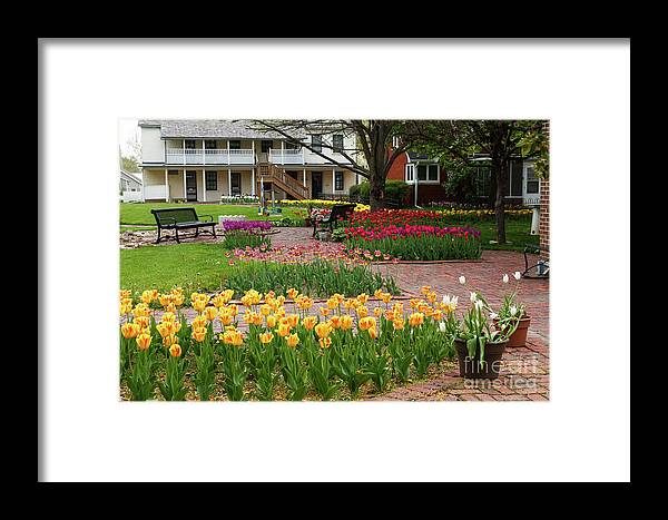 Tulips Framed Print featuring the photograph Tulips Abound by Terri Morris