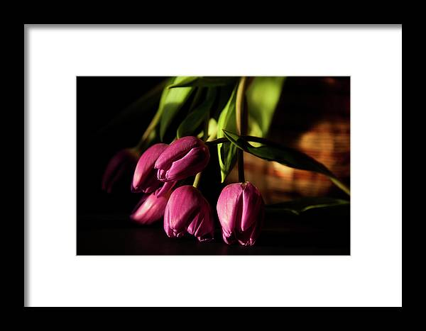 Tulips Framed Print featuring the photograph Tulips In Evening Sunlight by Toni Hopper