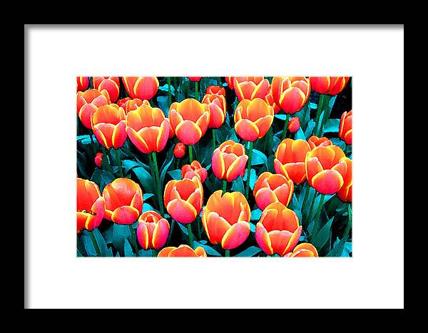 Framed Print featuring the photograph Tulips In Holland by Gene Sizemore