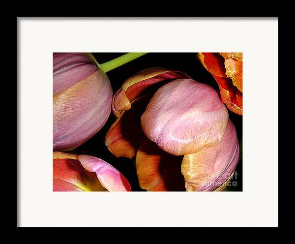 Nature Framed Print featuring the photograph Tulips In The Shadows by Lucyna A M Green