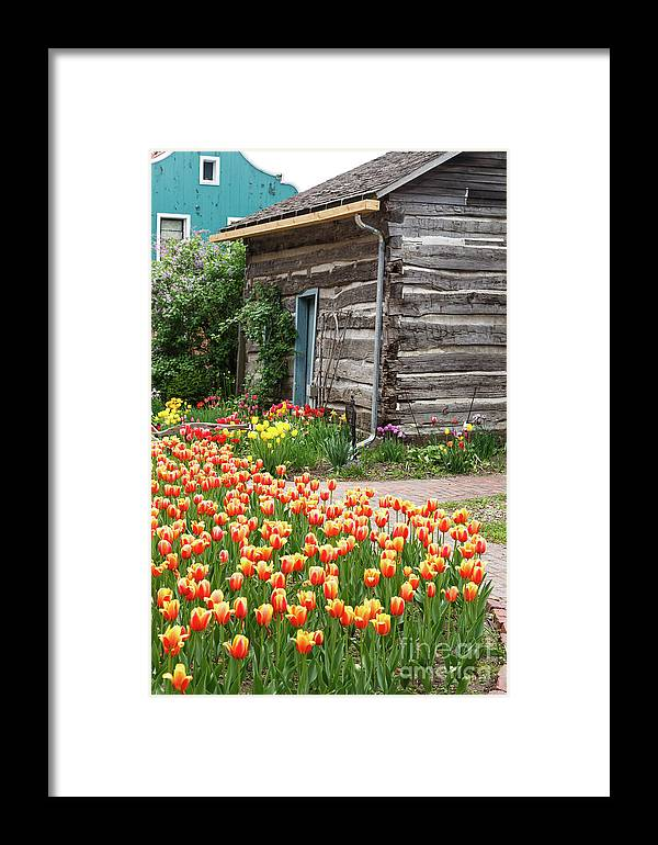 Tulips Framed Print featuring the photograph Tulips Lead To The Cabin by Terri Morris