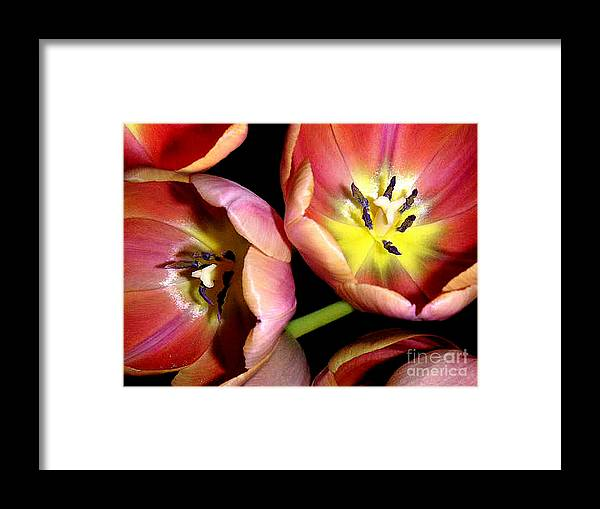 Nature Framed Print featuring the photograph Tulips Reaching For The Light by Lucyna A M Green