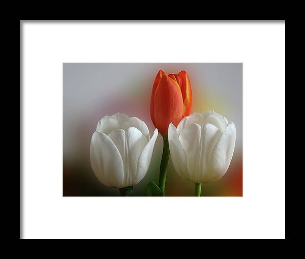 Spring Flowers Framed Print featuring the photograph Tulips by Sandy Keeton