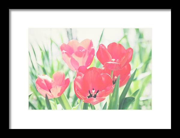 Tulips Framed Print featuring the photograph Tulips by Toni Hopper