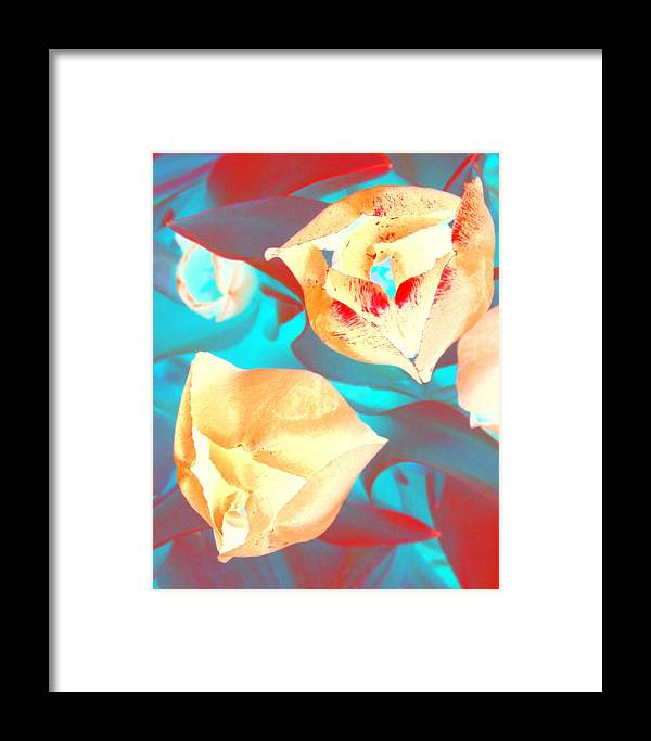 Tullips Framed Print featuring the photograph Tullip Glow by Tiffany Vest