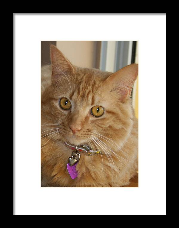 Cat Framed Print featuring the photograph Tuna by Allan E Dooley Jr