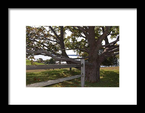 Landscape Framed Print featuring the photograph Turn At The Tree by Dale R Preston