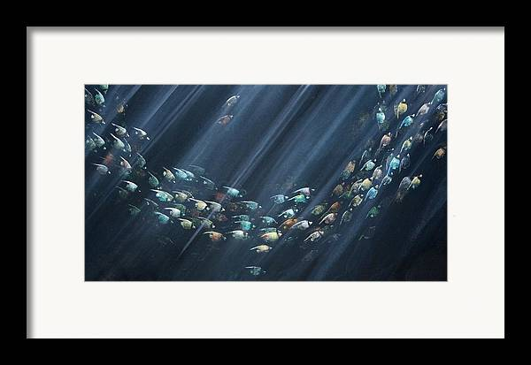 Fish Framed Print featuring the painting Turning Point by Ana Bikic