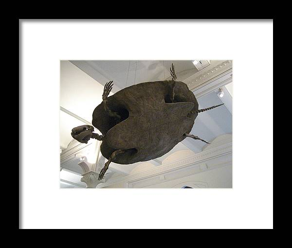 Turtle Framed Print featuring the photograph Turtle by Brian McDunn