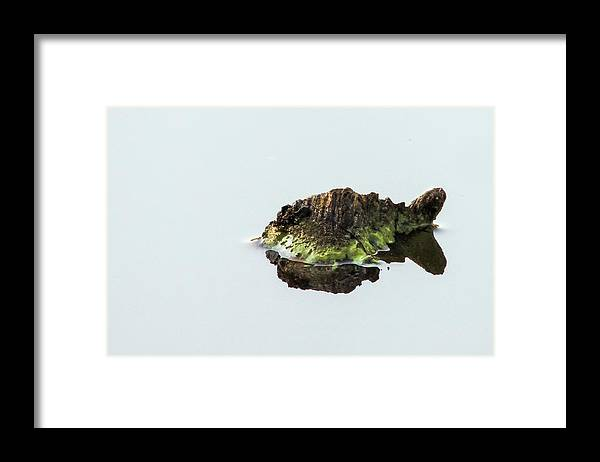 Turtle Framed Print featuring the photograph Turtle or Mountain by Randy J Heath