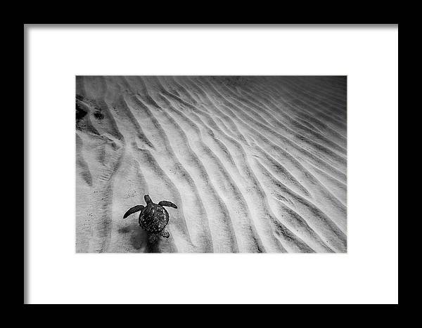 Under Water Framed Print featuring the photograph Turtle Ridge by Sean Davey