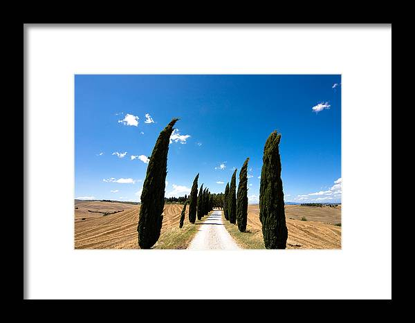 Tuscany Framed Print featuring the photograph Tuscan Cypress Landscape by Mathew Lodge