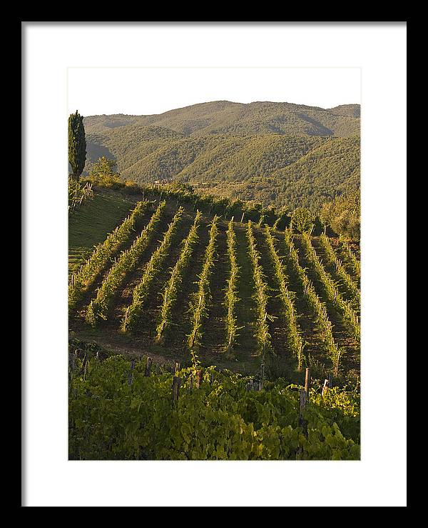 Tuscany Framed Print featuring the photograph Tuscan Vineyards At Sunset by Jim DeLillo