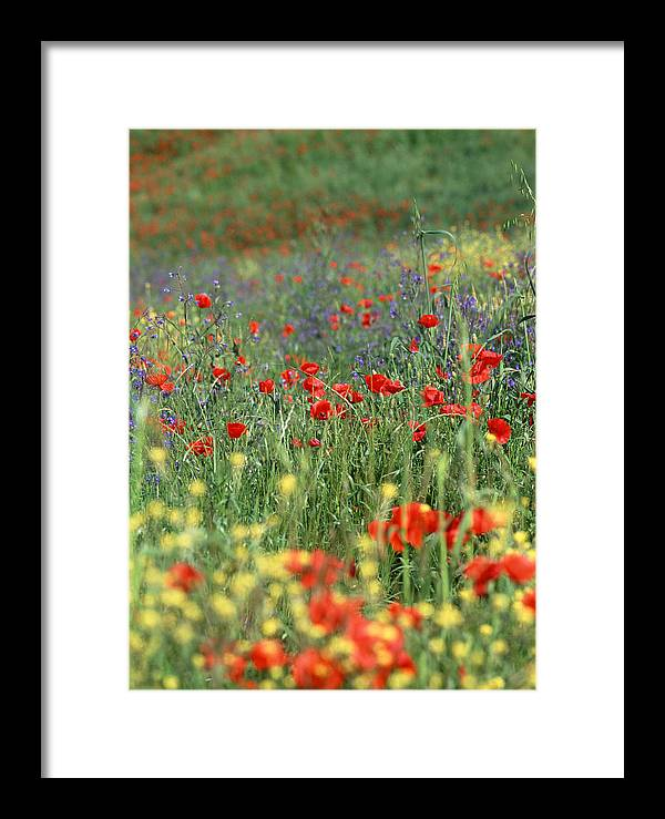Flowers Framed Print featuring the photograph Tuscan Wildflowers by Michael Hudson