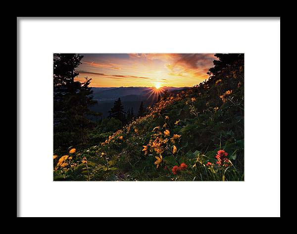 Balsamroot Framed Print featuring the photograph Twilight Of The Balsamroot by John Christopher