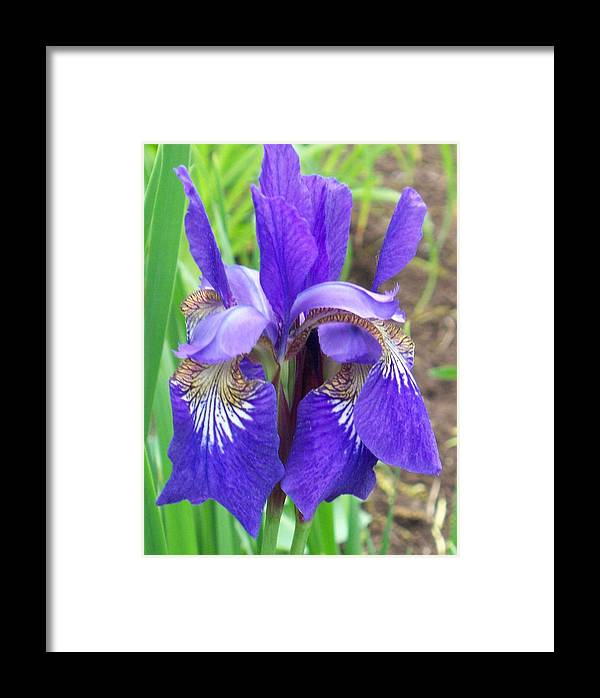 Flower Framed Print featuring the photograph Twin Irises by Ellen B Pate