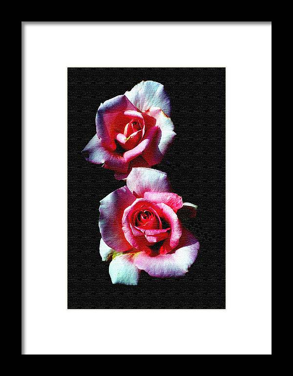 Rose Framed Print featuring the photograph Twin Roses by Ralph Perdomo