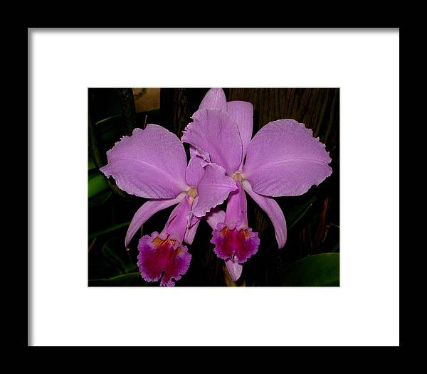 Orchid Framed Print featuring the photograph Twins by Betnoy Smith