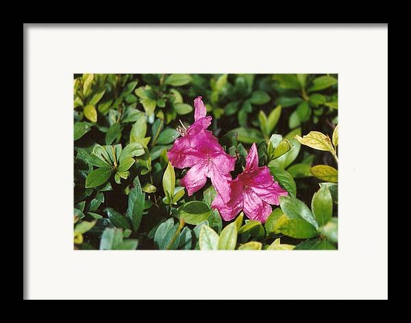 Flowers Framed Print featuring the photograph Twins by Brian Edward Harris