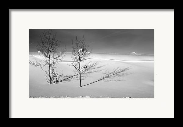 Nature Framed Print featuring the photograph Twins by Skip Hunt