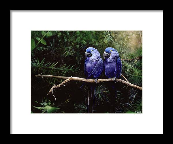 Macaw Art Framed Print featuring the painting Twins by Steve Goad