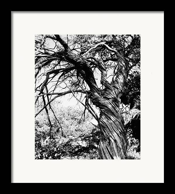 Tree Framed Print featuring the photograph Twisted Beauty by Allan McConnell