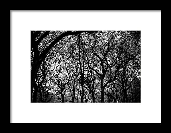 Nyc Framed Print featuring the photograph Twisted Trees by Robert J Caputo