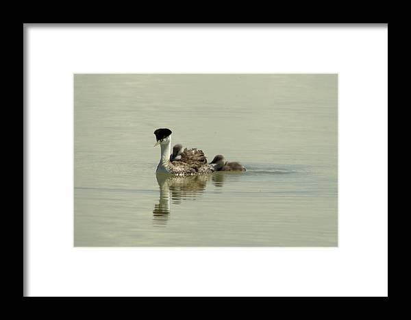 Greb Framed Print featuring the photograph Two Babies An Mother by Jeff Swan
