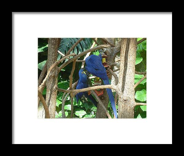 Parrotts Framed Print featuring the photograph Two Birds by Paula Ferguson