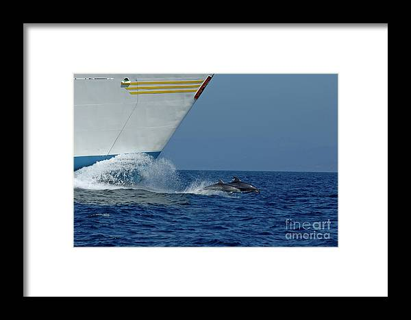 Andalusia Framed Print featuring the photograph Two Bottlenose Dolphins Swimming In Front Of A Ship by Sami Sarkis