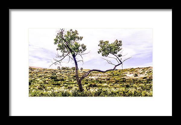 Tree Framed Print featuring the photograph Two Branches by Keith Kadwell