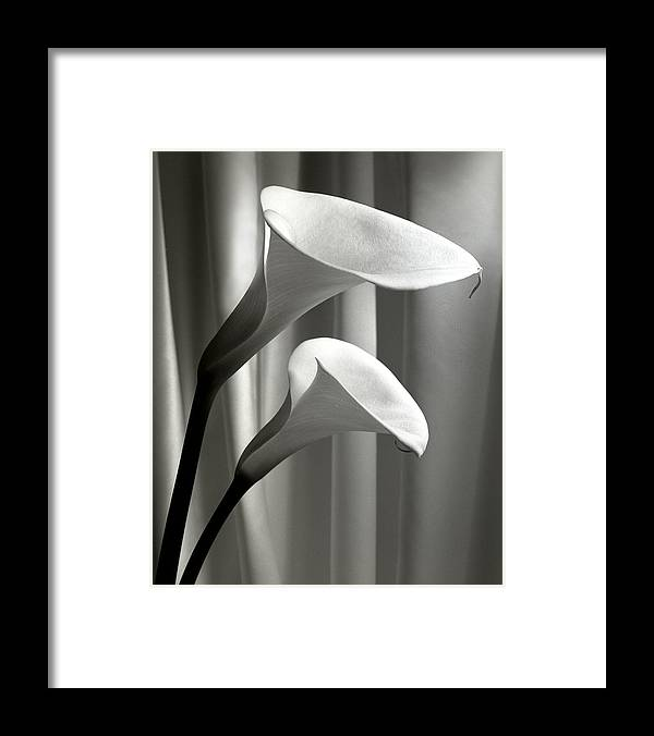 Flower Framed Print featuring the photograph Two Callas by Cathy Dixson
