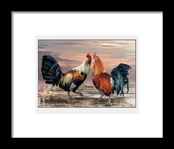 Roosters Cocks Farm Animals Game Cocks Birds Framed Print featuring the painting Two Cocks Head To Head by John Breen