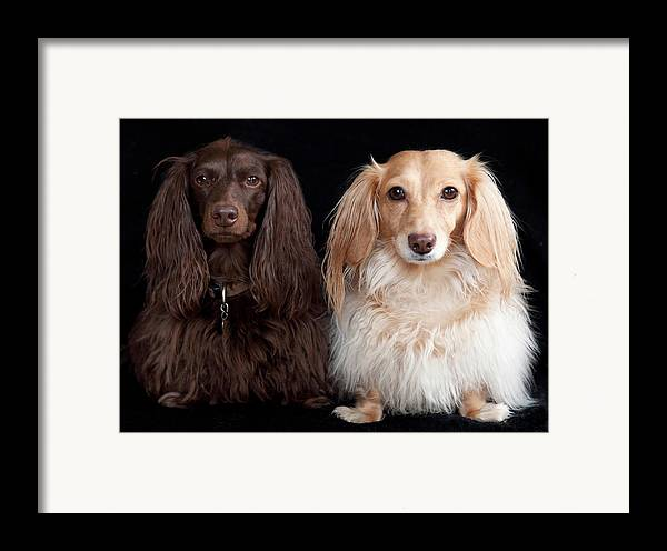 Horizontal Framed Print featuring the photograph Two Dachshunds by Doxieone Photography