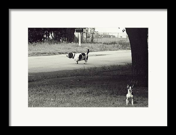 Dogs Framed Print featuring the photograph Two Dogs by Toni Hopper