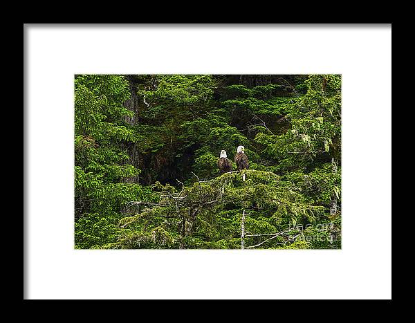Alaska Framed Print featuring the photograph Two Eagles Perched Painterly by Jennifer White