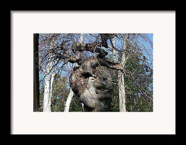 Elephant Framed Print featuring the photograph Two Elephants In A Tree by Doug Mills