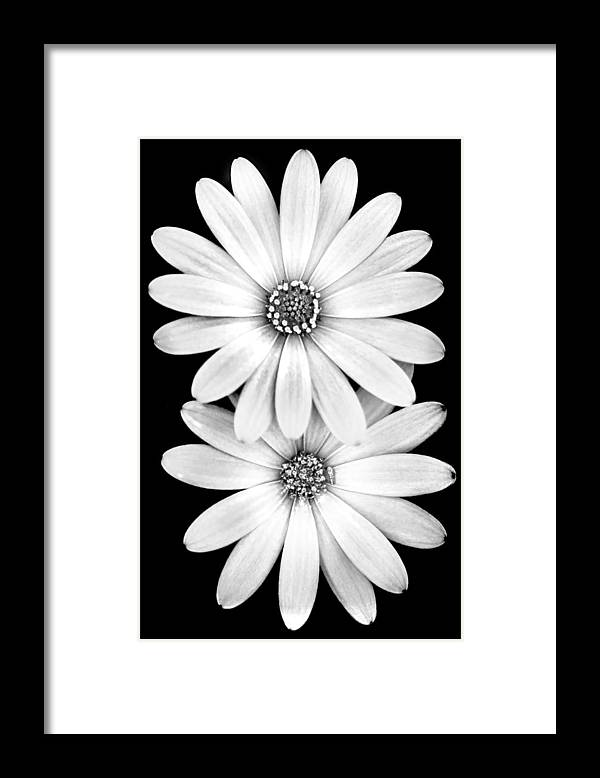 Spring Flowers Framed Print featuring the photograph Two Flowers by Az Jackson