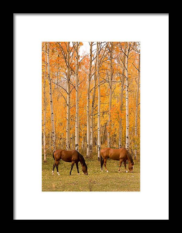 Horse Framed Print featuring the photograph Two Horses Grazing In The Autumn Air by James BO Insogna