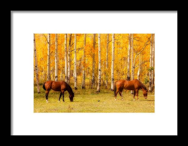 Autumn Framed Print featuring the photograph Two Horses In The Colorado Fall Foliage by James BO Insogna