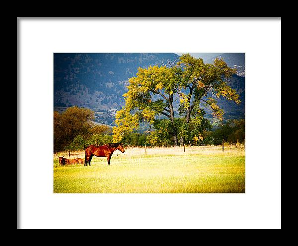 Animal Framed Print featuring the photograph Two Horses by Marilyn Hunt