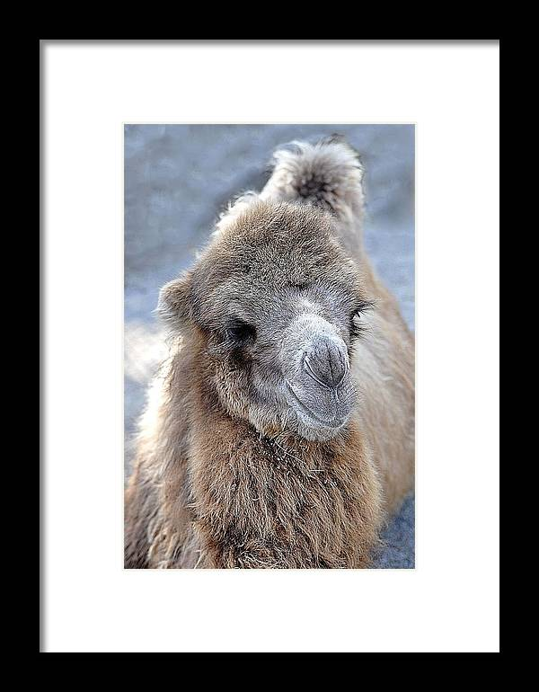 Animals Framed Print featuring the photograph Two Lumps Please by Jan Amiss Photography