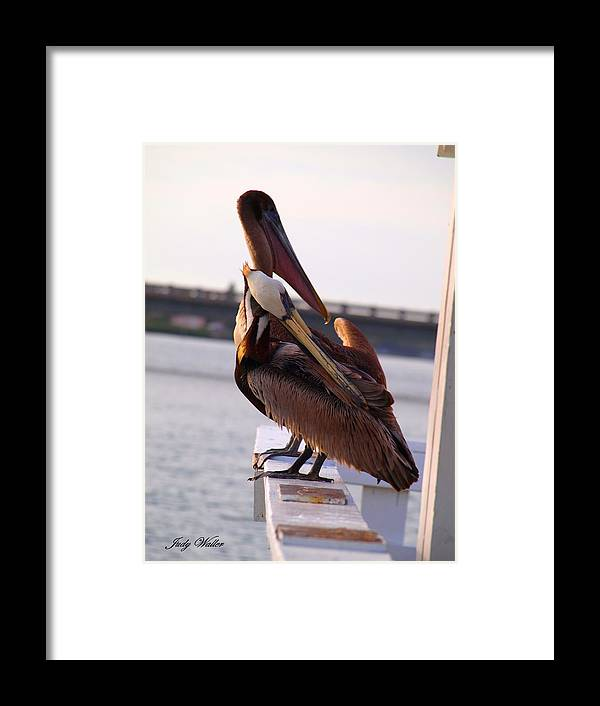 Two Framed Print featuring the photograph Two Of A Kind by Judy Waller