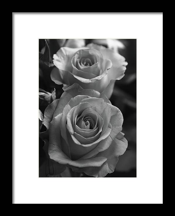 cffe5a84b Flowers Framed Print featuring the photograph Two Roses Black And White by  Jeff Townsend