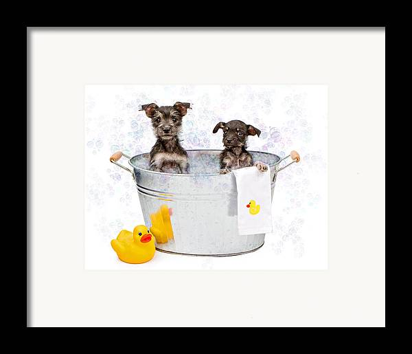 Dog Framed Print featuring the photograph Two Scruffy Puppies In A Tub by Susan Schmitz