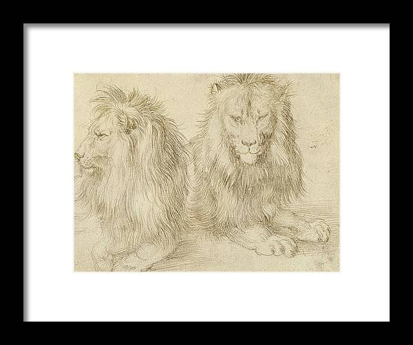 Albrecht Durer Framed Print featuring the drawing Two Seated Lions by Albrecht Durer