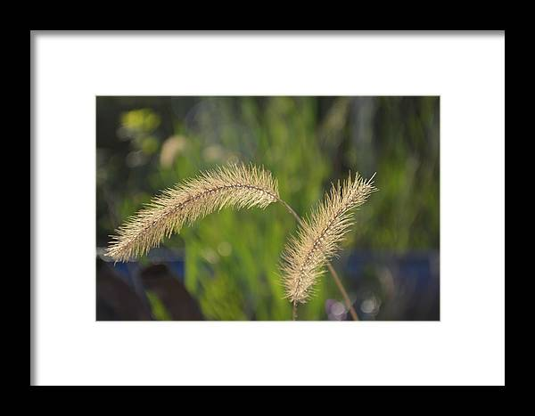 Flowers Framed Print featuring the photograph Two Way Sways by Tina M Wenger